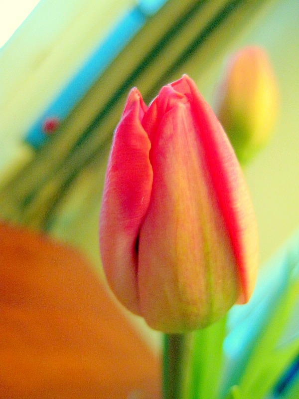 Tulips in Jelly Beans Easter Centerpiece 5