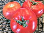 Make-Your-Own-Sun-Dried-Tomatoes-1-1