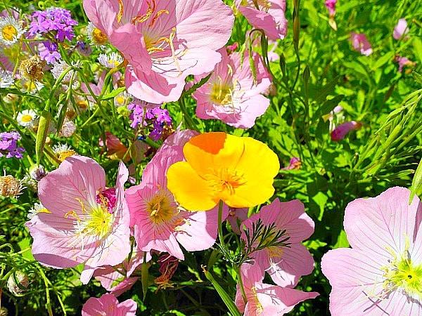 Spring at the Desert Botanical Gardens 23