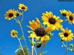 Desert-Botanical-Garden-45-1