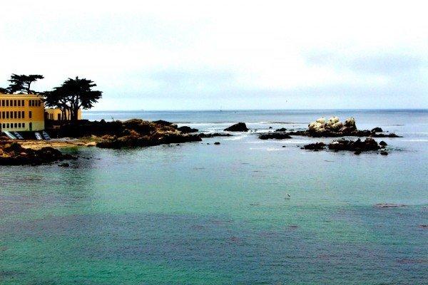 Monterey Bay Aquarium 11