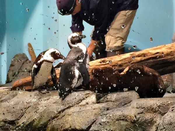 Monterey Bay Aquarium 16