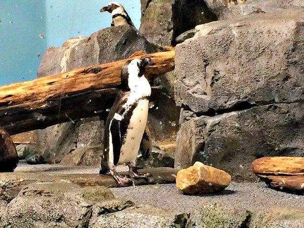 Monterey Bay Aquarium 17