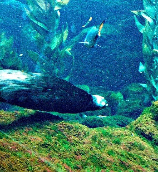 Monterey Bay Aquarium 20