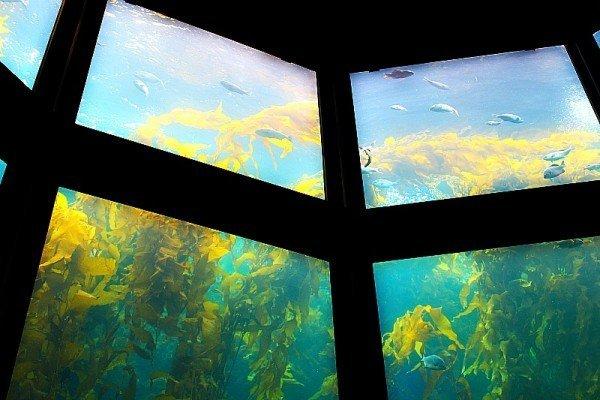 Monterey Bay Aquarium 8