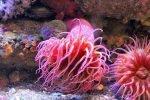 Monterey-Bay-Aquarium-9