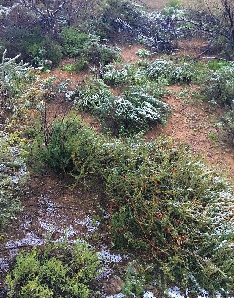 Snow in Central Arizona12