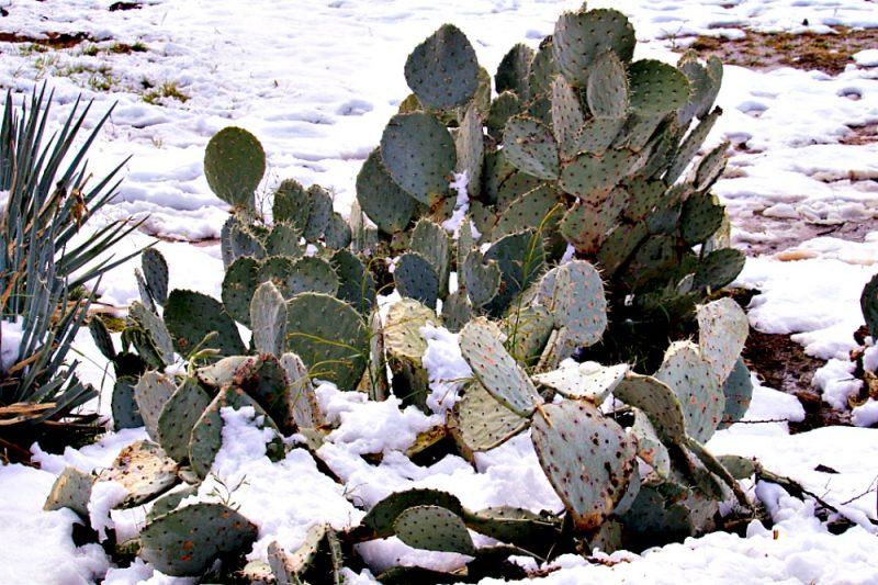 Snow in Central Arizona5