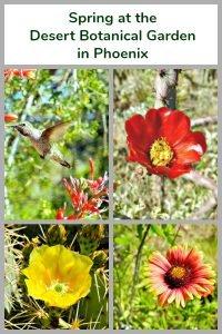 Spring at the Desert Botanical Garden in Phoenix